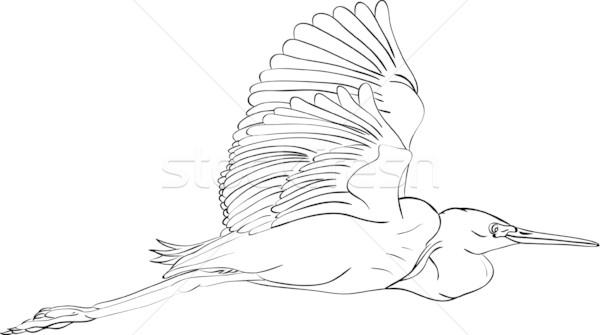 great egret   Stock photo © pavelmidi