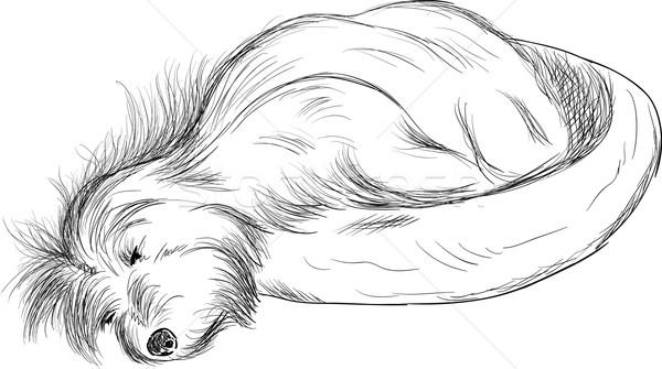 Cão adormecido vetor cama algodão cabelo Foto stock © pavelmidi