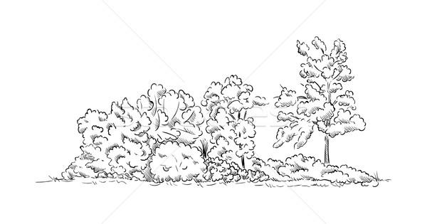 Arbres vecteur isolé arbre fond Photo stock © pavelmidi