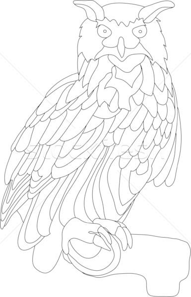 owl Stock photo © pavelmidi