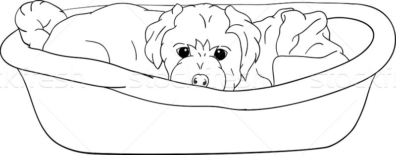 small puppy lying in cot Stock photo © pavelmidi
