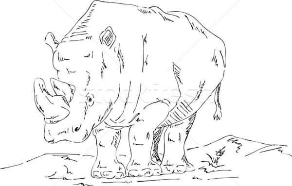 big rhino Stock photo © pavelmidi