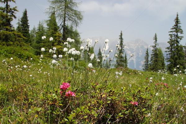 Flower on meadow Stock photo © pavelmidi