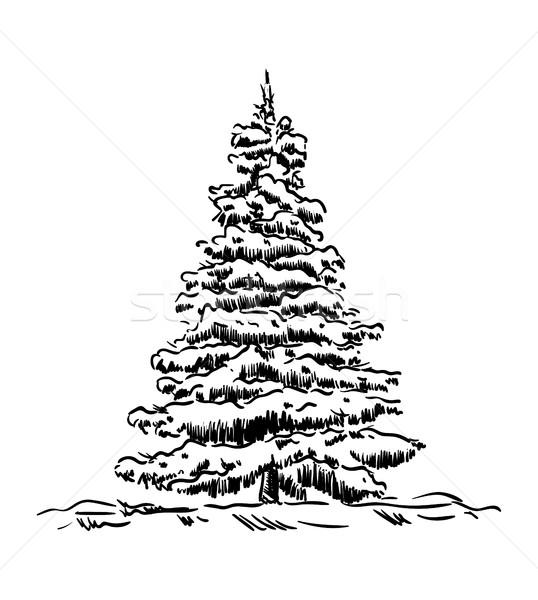 Fichte Baum Vektor Winter Zeit Holz Stock foto © pavelmidi