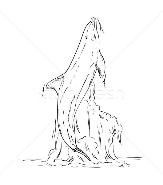 Vetor golfinhos saltando fora água peixe Foto stock © pavelmidi