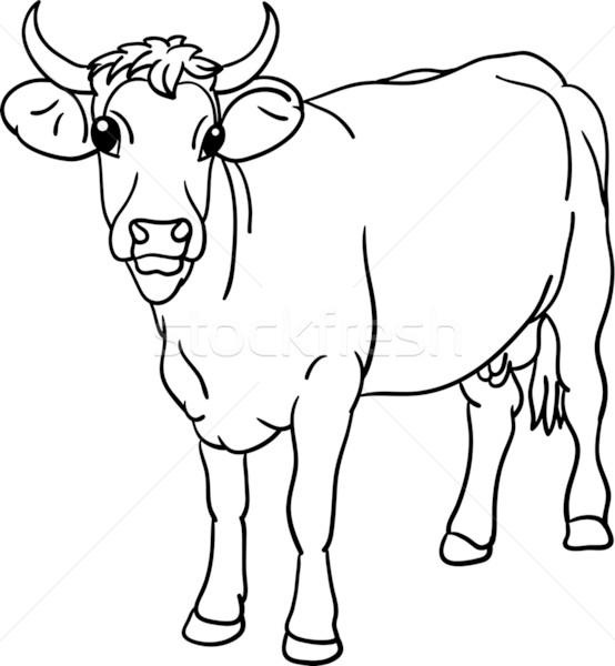 приеме коровы в разных ракурсах Цены