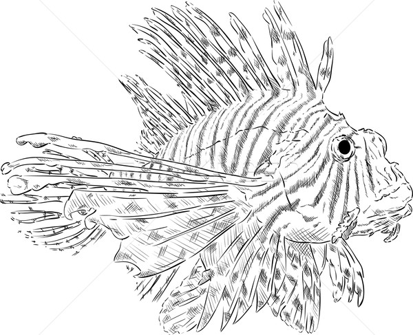 Pterois volitans Stock photo © pavelmidi