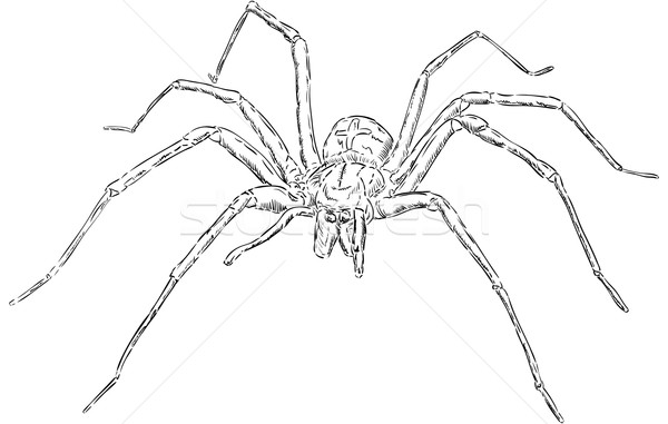 Orumcek Buyuk Gormek Boya Siyah Vektor Ilustrasyonu