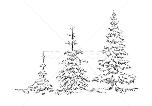 Enfeitar vetor três árvores inverno tempo Foto stock © pavelmidi