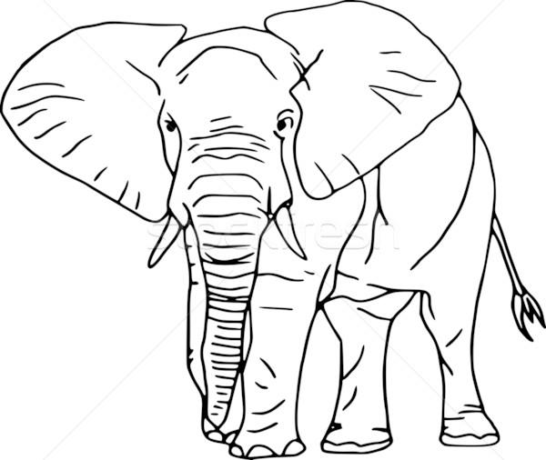 Vetor contorno elefante isolado branco natureza Foto stock © pavelmidi
