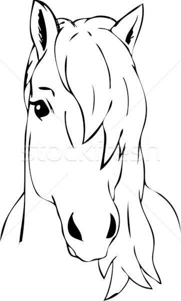 haired horse head Stock photo © pavelmidi