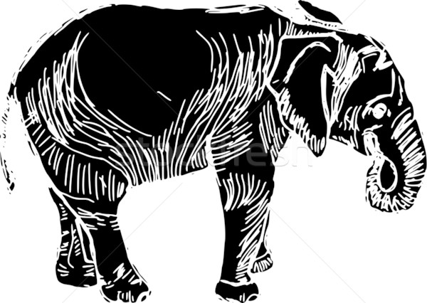 elephant Stock photo © pavelmidi