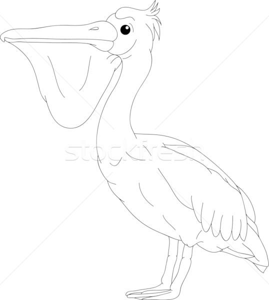pelican Stock photo © pavelmidi