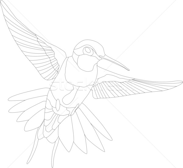 hummingbird Stock photo © pavelmidi