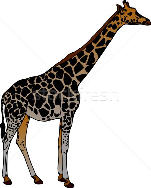 Zürafa vektör yalıtılmış beyaz mutlu soyut Stok fotoğraf © pavelmidi