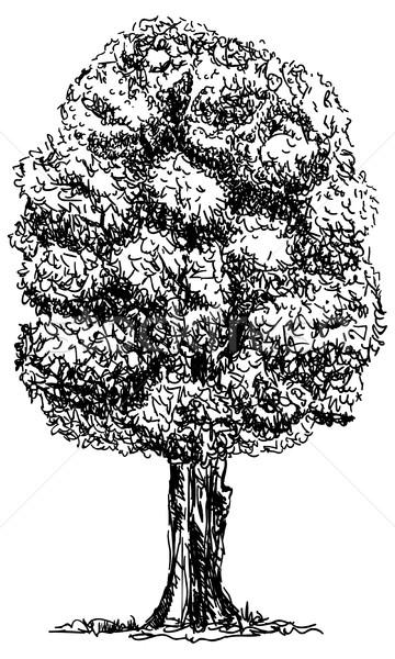 big  tree  Stock photo © pavelmidi