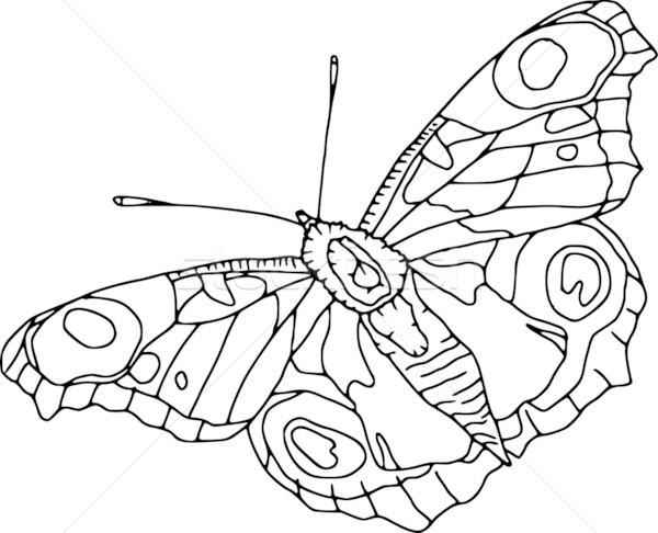 Papillon vecteur contour isolé blanche art Photo stock © pavelmidi
