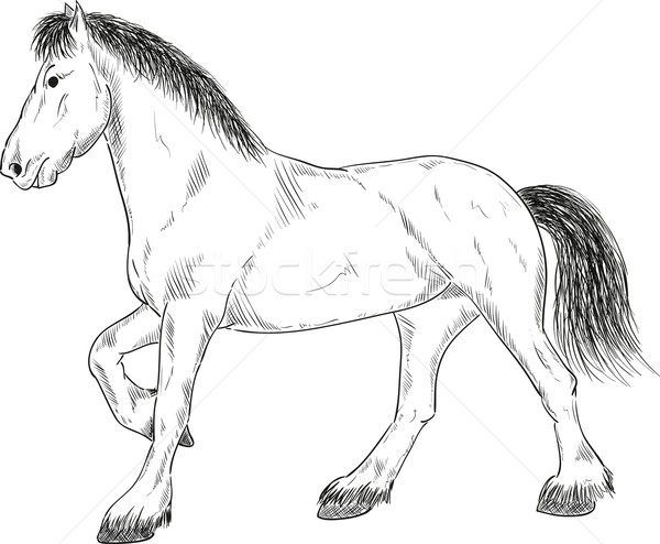 Pferd stehen Vektor stehen schwarz Zeichnung Stock foto © pavelmidi