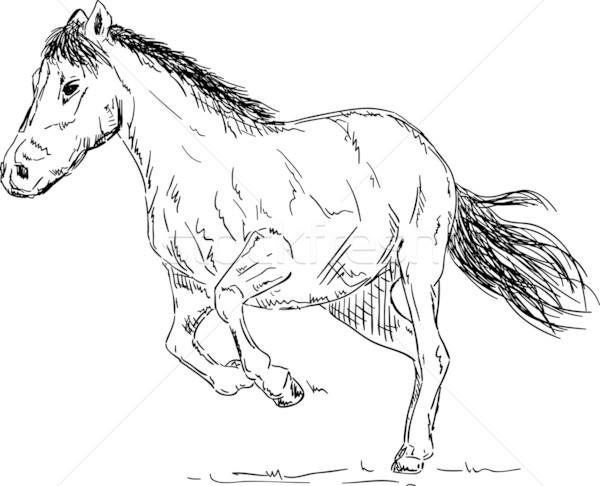 At çalışma vektör yalıtılmış hayvan Stok fotoğraf © pavelmidi