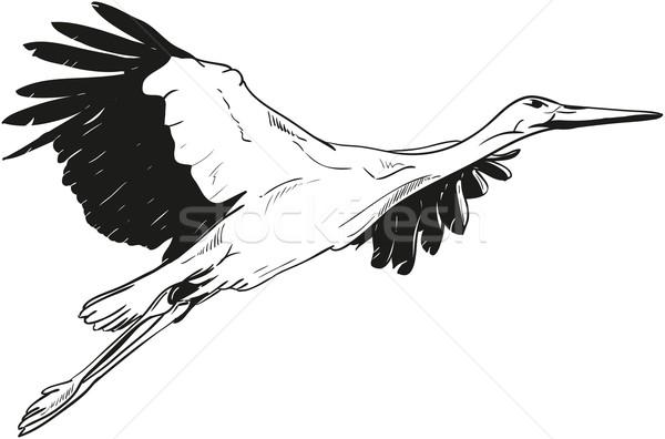 Beyaz Leylek Vektör Uçan Doğa Boya Vektör Ilüstrasyonu