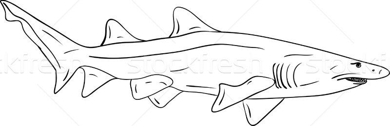 Rekina wektora duży odizolowany wody charakter Zdjęcia stock © pavelmidi
