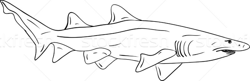 Köpekbalığı vektör büyük yalıtılmış su doğa Stok fotoğraf © pavelmidi