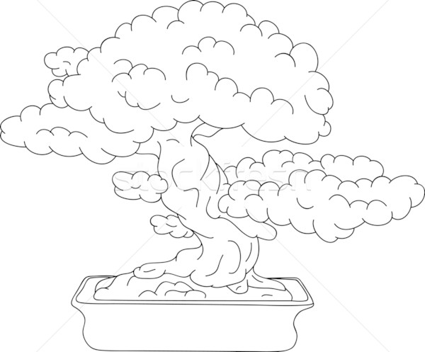 bonsai Stock photo © pavelmidi
