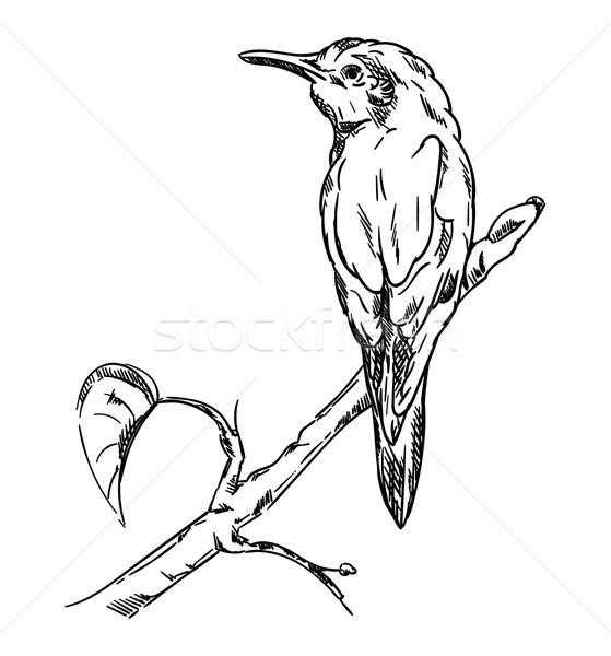 Сток-фото: зимородок · вектора · сидят · филиала · искусства · синий