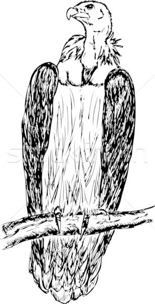 большой гриф сидят филиала птица портрет Сток-фото © pavelmidi