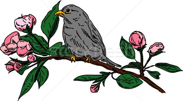 bird on branch Stock photo © pavelmidi