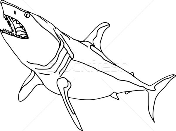 Rekina wektora kontur odizolowany biały wody Zdjęcia stock © pavelmidi