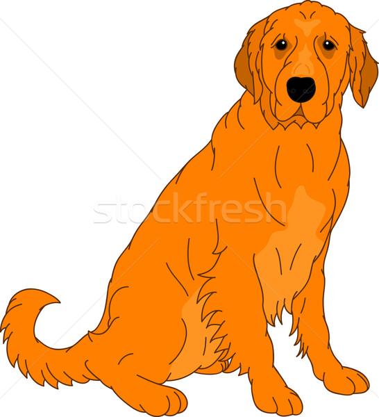 Labrador retriever vektör krem yalıtılmış yüz boya Stok fotoğraf © pavelmidi