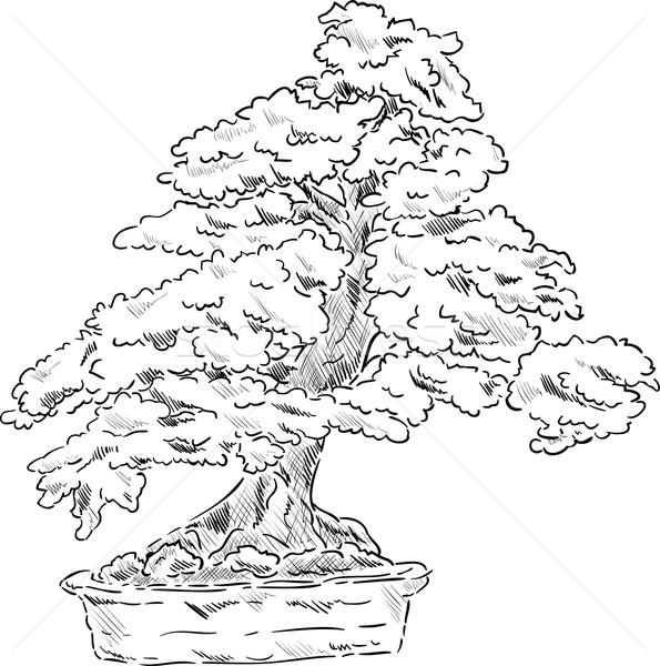 Bonsai boom vector bloempot blad achtergrond Stockfoto © pavelmidi