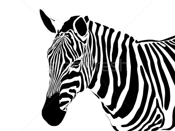 zebra Stock photo © pavelmidi