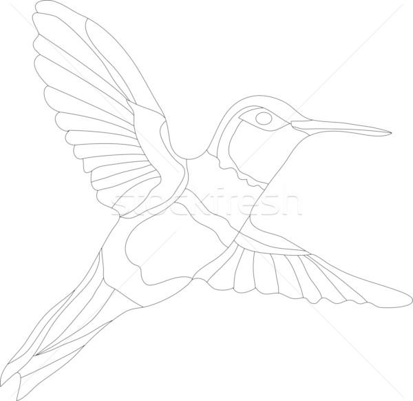 ハチドリ ベクトル 孤立した 白 デザイン 美 ストックフォト © pavelmidi