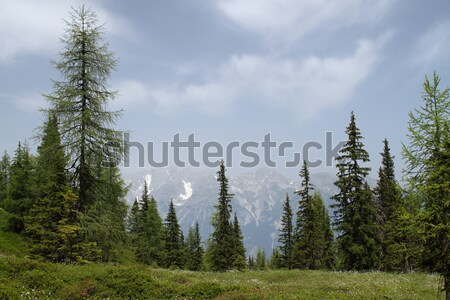 Snow-capped mountains, a meadow Stock photo © pavelmidi