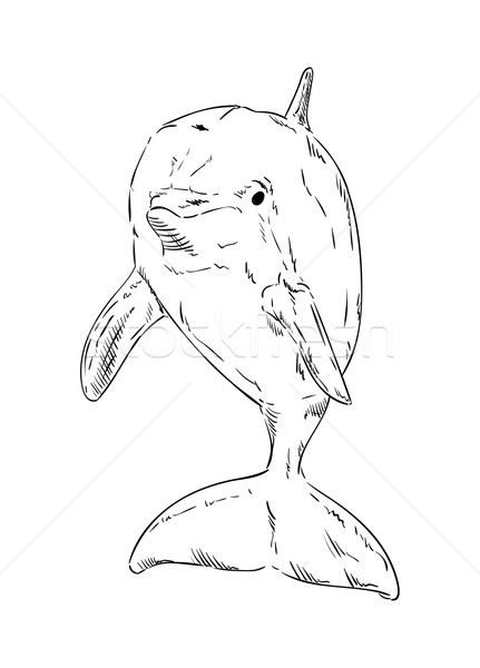 vector -  Dolphins  jumping out of the water Stock photo © pavelmidi
