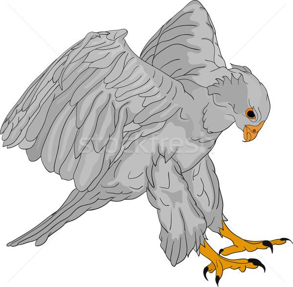 Falcão vetor grande natureza arte pássaro Foto stock © pavelmidi