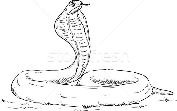 Cobra alertar vetor natureza retrato cabeça Foto stock © pavelmidi