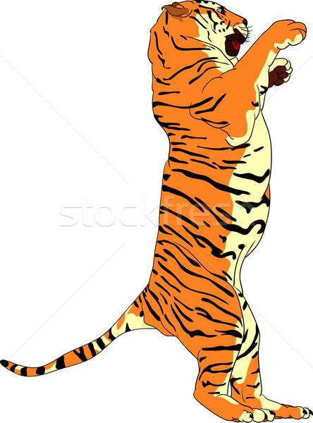 tiger Stock photo © pavelmidi