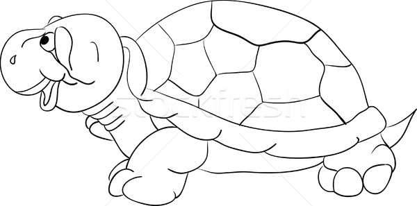 Kaplumbağa vektör yalıtılmış gülümseme dizayn yeşil Stok fotoğraf © pavelmidi