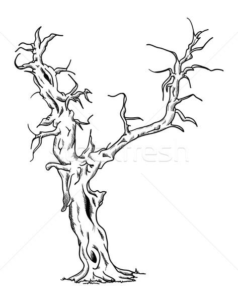 vector - Big old tree  Stock photo © pavelmidi
