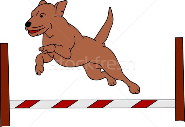 dog agility Stock photo © pavelmidi