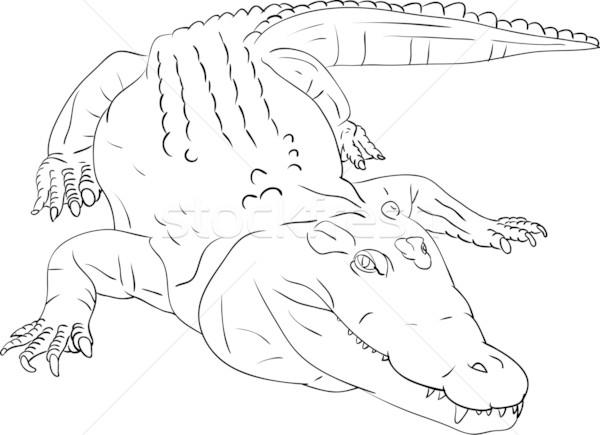 Krokodil Vektor isoliert Kunst Malerei Zähne Stock foto © pavelmidi