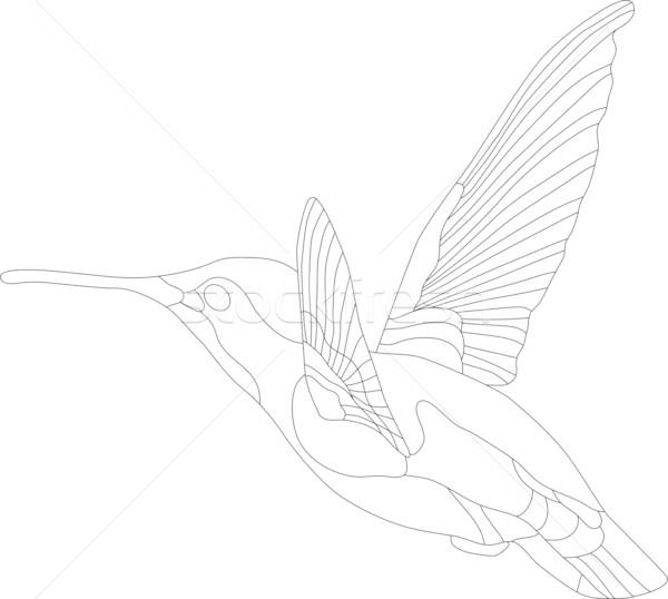 hummingbird Stock photo © pavelmidi