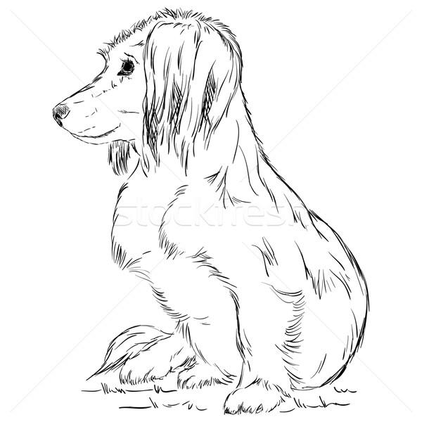 small dog  Stock photo © pavelmidi