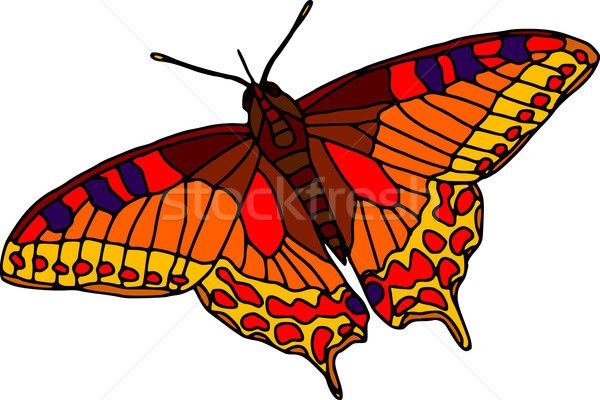 butterfly Stock photo © pavelmidi