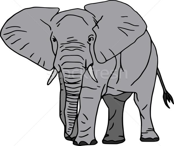 Vecteur éléphant isolé blanche nature animaux Photo stock © pavelmidi
