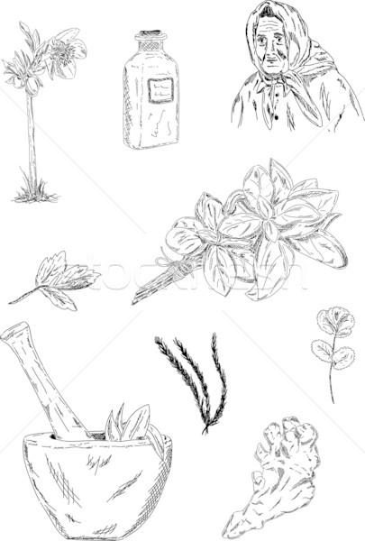 Сток-фото: травы · вектора · набор · старые · цветок · лист