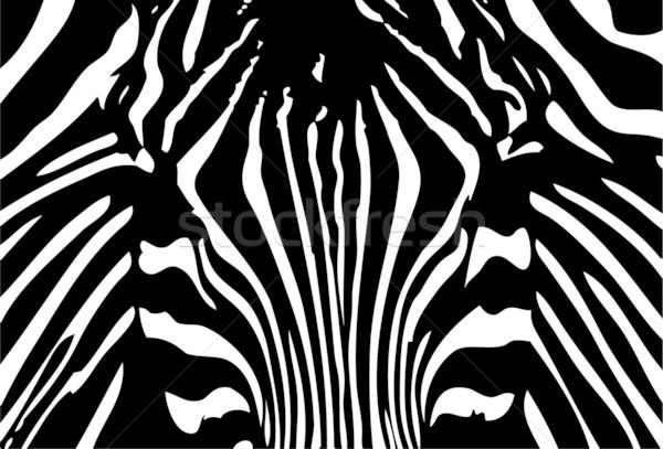 Zebra vektör siyah beyaz soyut çerçeve sanat Stok fotoğraf © pavelmidi